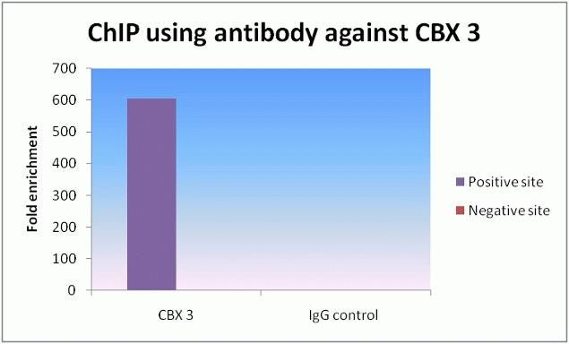HP1 gamma Antibody (730018) in ChIP assay