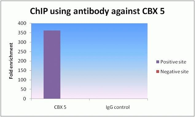 HP1 alpha Antibody (730019) in ChIP assay