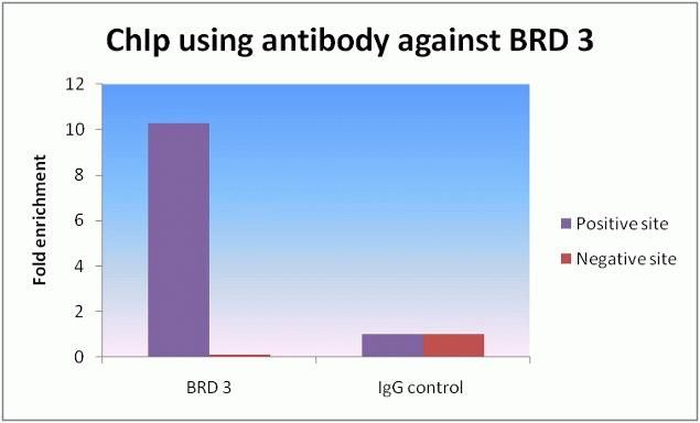 BRD3 Antibody (730024) in ChIP assay