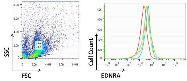 Rabbit IgG (H+L) Highly Cross-Adsorbed Secondary Antibody (A-31572) in Flow Cytometry