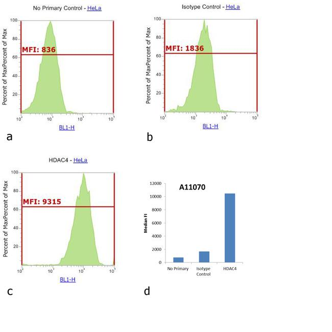 Rabbit IgG (H+L) Cross-Adsorbed Secondary Antibody (A-11070) in Flow Cytometry