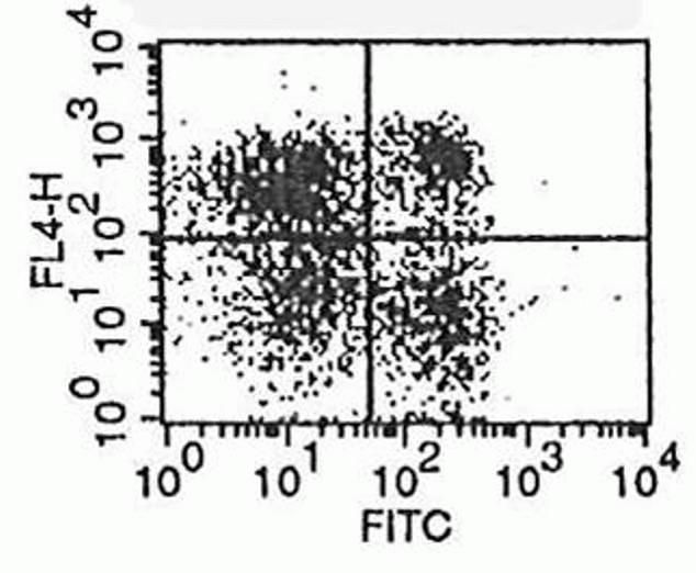 CD62L Antibody (A14720) in Flow Cytometry