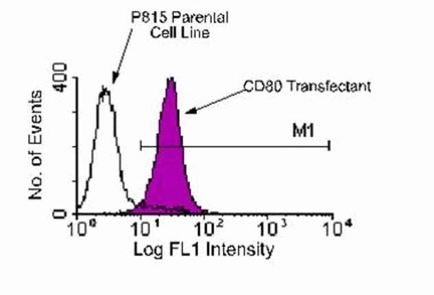 CD80 Antibody (A14722) in Flow Cytometry