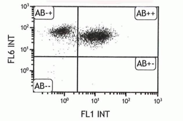 CD45.1 Antibody (A14734)