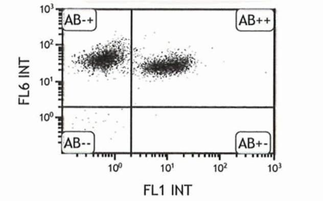 CD45.2 Antibody (A14737) in Flow Cytometry