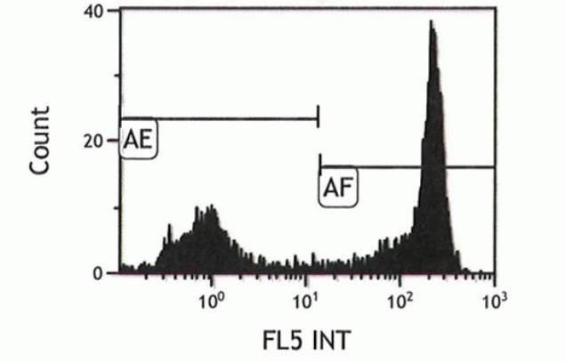 Ly-6G Antibody (A14748)