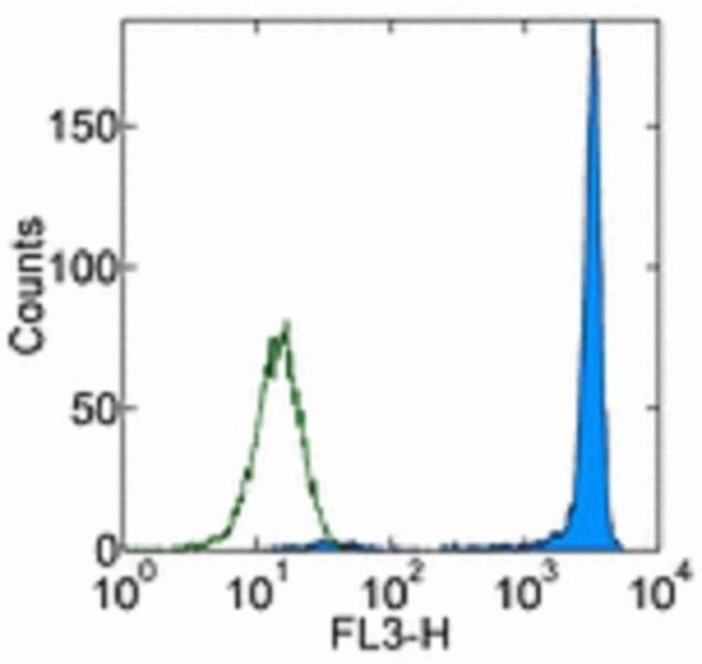 CD90.1 / Thy-1.1 Antibody (A14798)