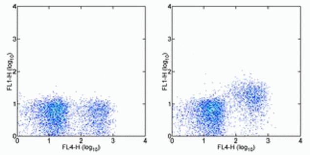 CD127 Antibody (A14809)