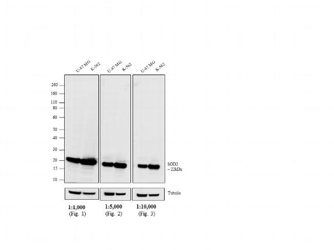 Mouse IgG (H+L) Highly Cross-Adsorbed Secondary Antibody (A16078)