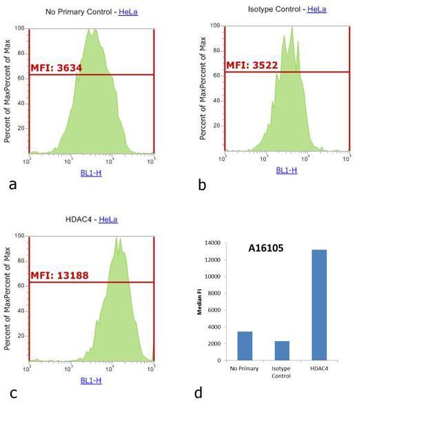Rabbit IgG (H+L) Cross-Adsorbed Secondary Antibody (A16105)
