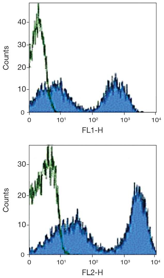 MHC II Antibody (A16208)