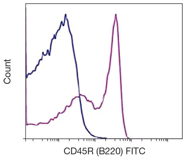 CD45R Antibody (A16313)