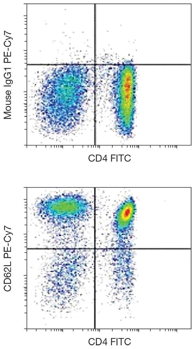 CD62L Antibody (A16359)