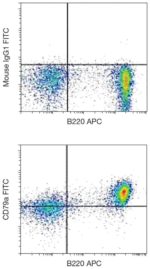 CD79a Antibody (A16369)