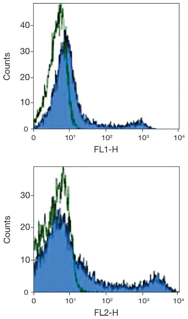 CD90.1 / Thy-1.1 Antibody (A16370)