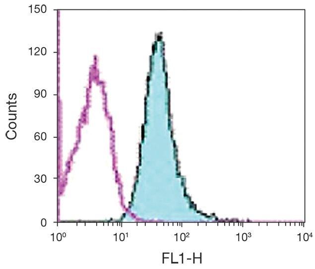 CD98 / SLC3A2 Antibody (A16372)
