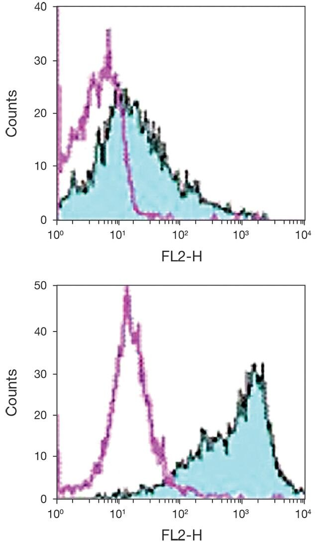 CD86 / B7-2 Antibody (A16385)