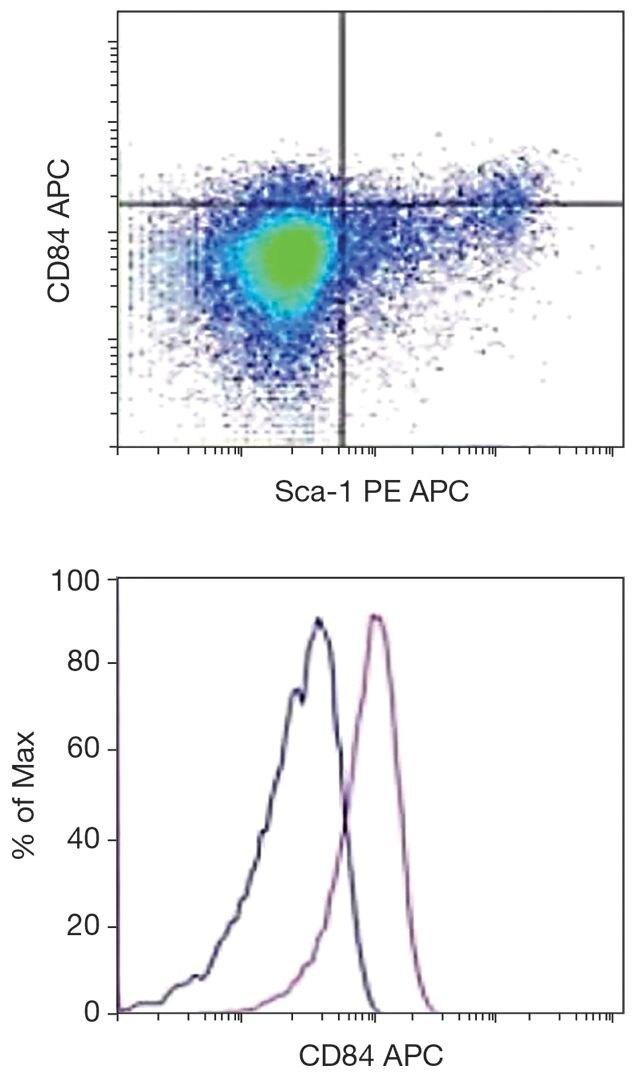CD84 Antibody (A16412)