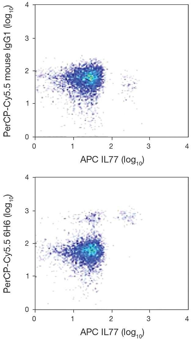 IL-3R alpha / CD123 Antibody (A16426)