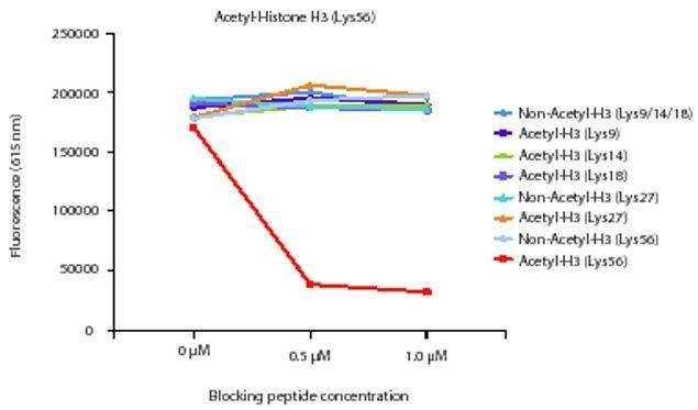 Acetyl-Histone H3 (Lys56) Antibody (A16634) in ELISA