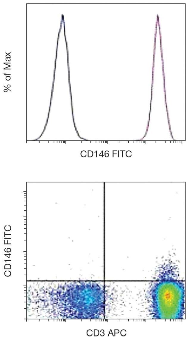 CD146 Antibody (A18338)