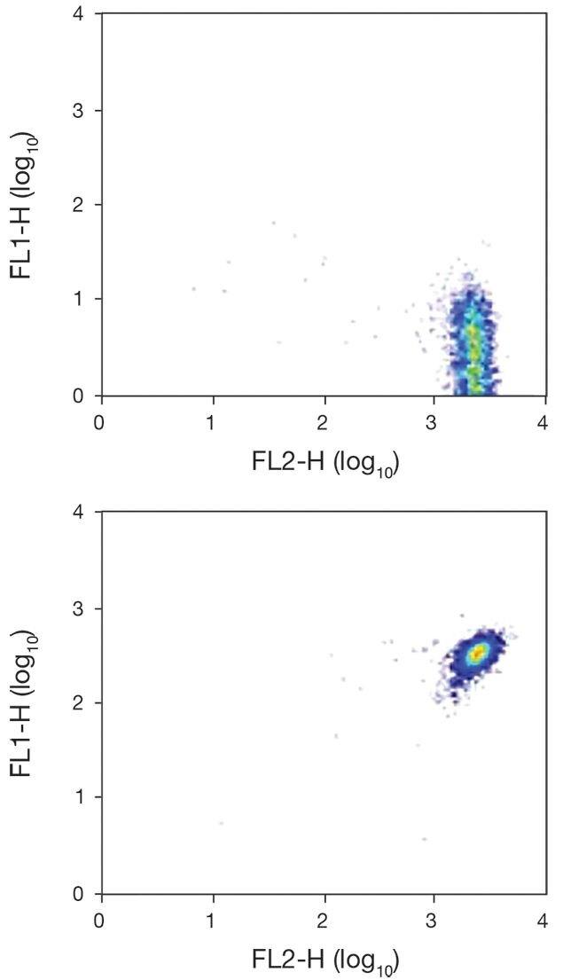 CXCR1 Antibody (A18342)
