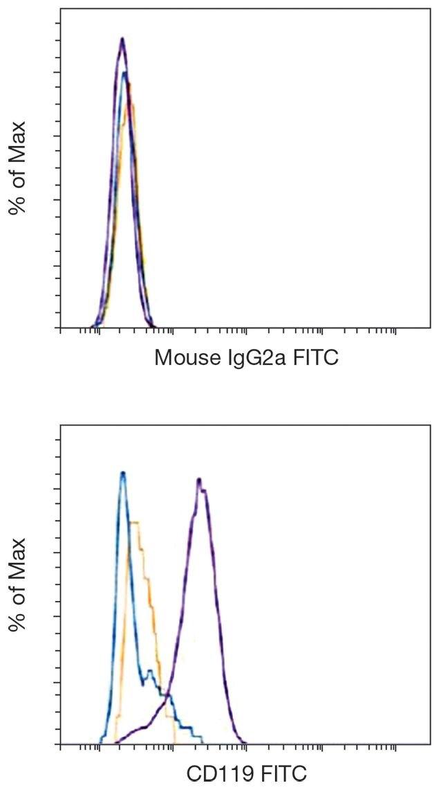 CCR9 / CD199 Antibody (A18344)