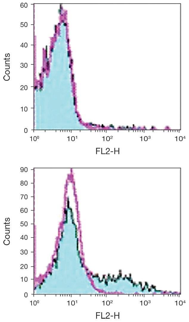 CD153 Antibody (A18356)
