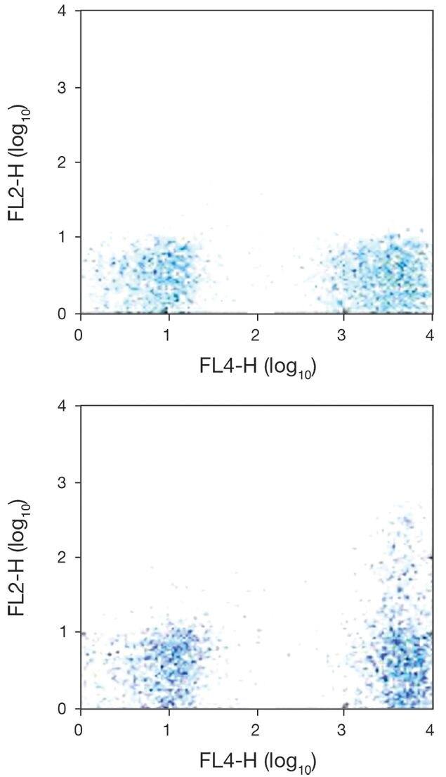 CCR5 / CD195 Antibody (A18367)