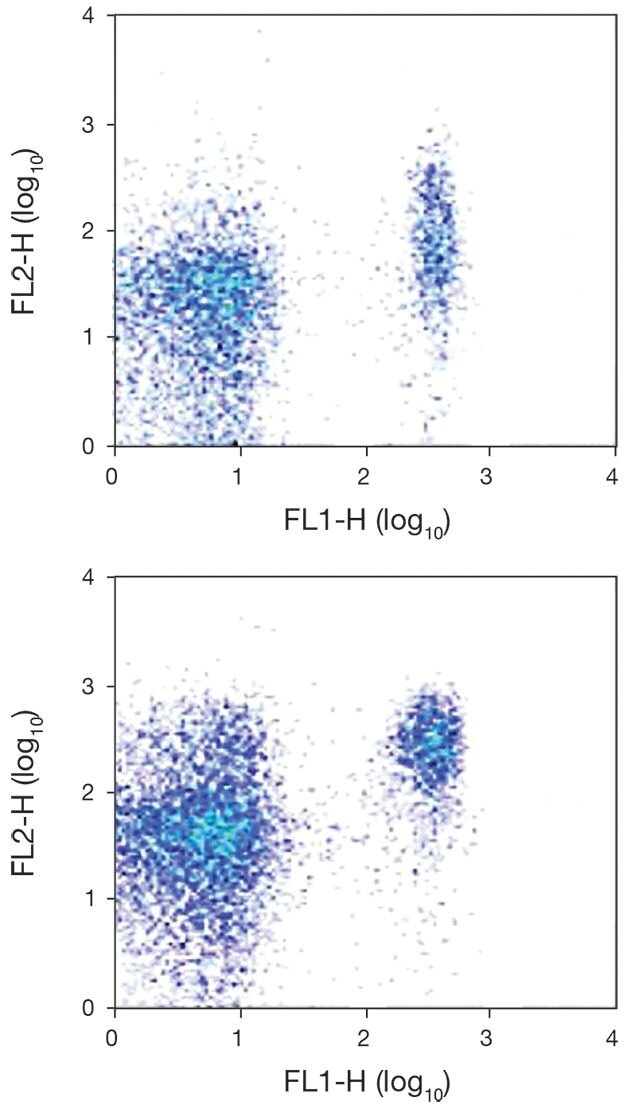 CCR7 / CD197 Antibody (A18369)
