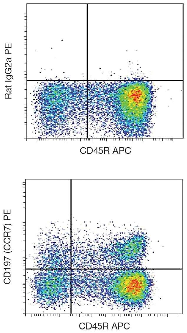 CCR7 / CD197 Antibody (A18370)