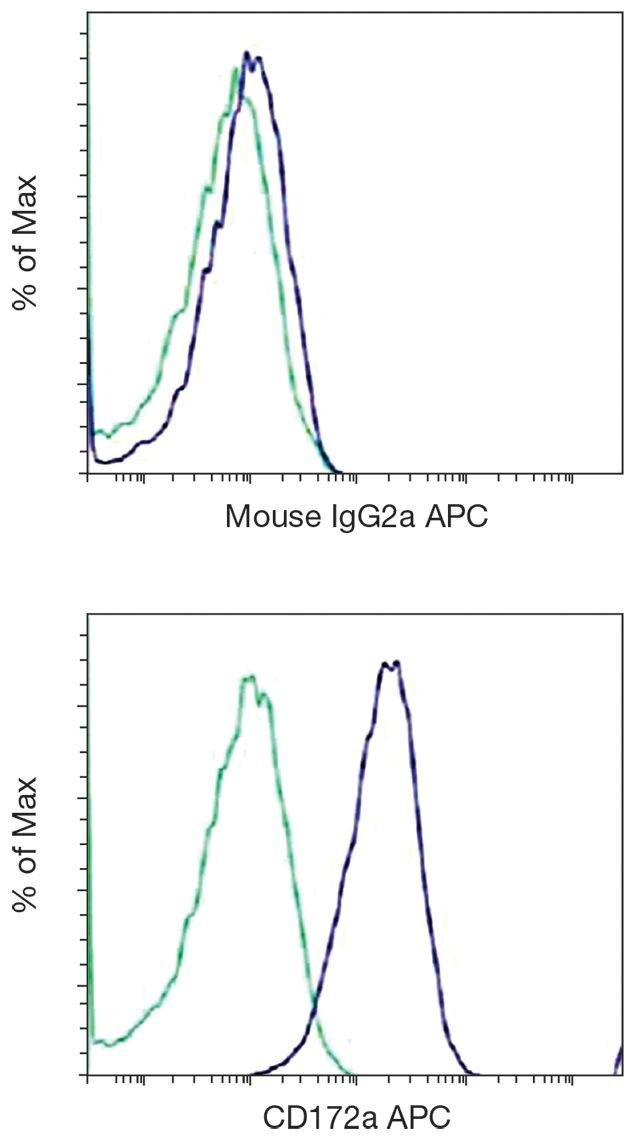 SIRP alpha / CD172a Antibody (A18387)