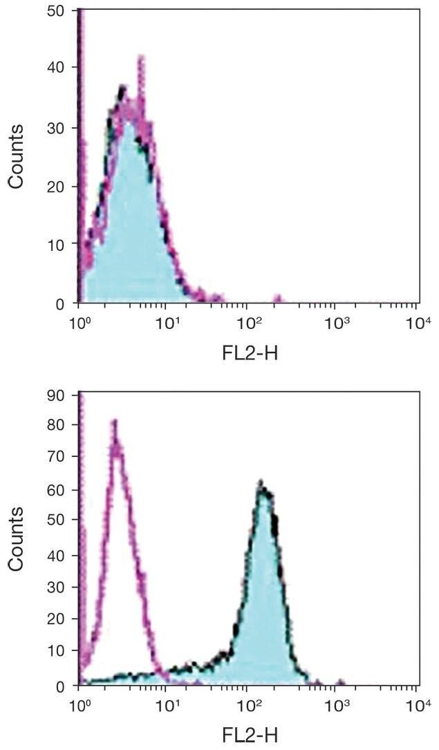 CD273 Antibody (A18421)