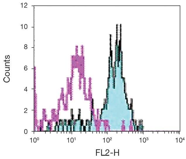 TLR2 Antibody (A18434)