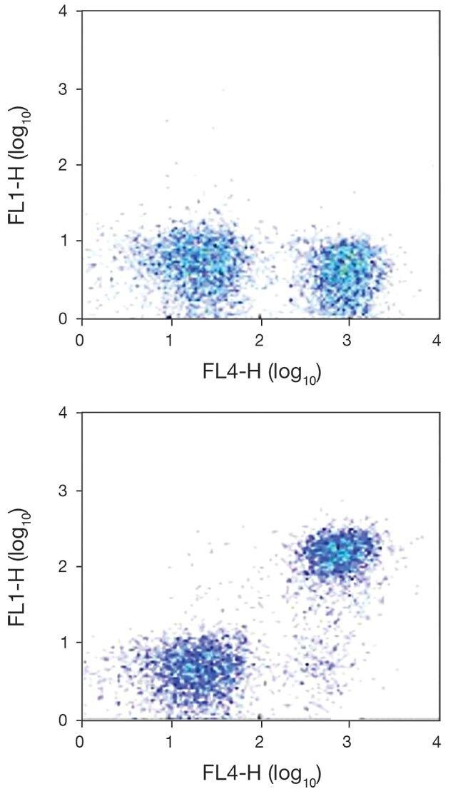 TCR alpha/beta Antibody (A18461)