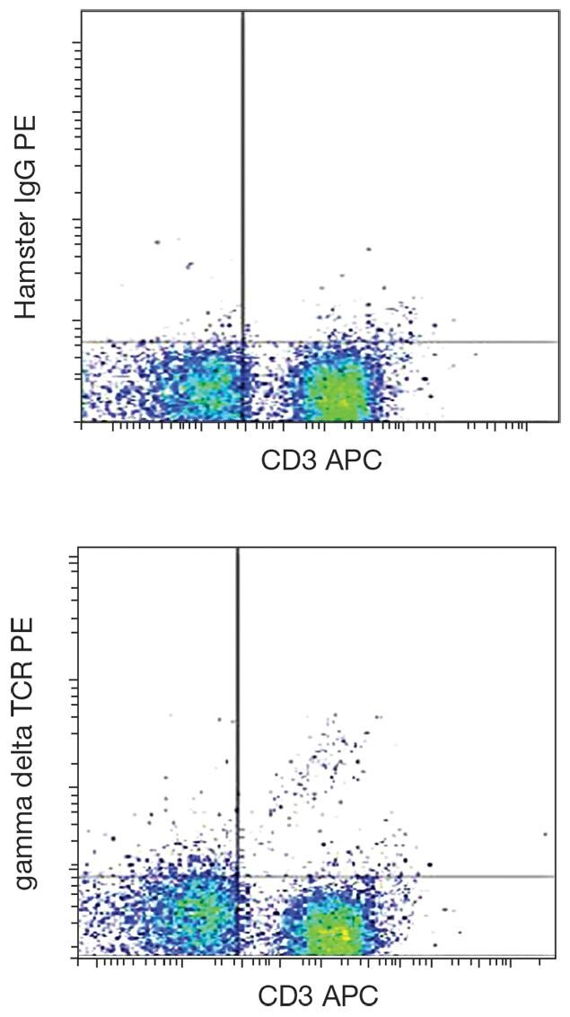 TCR gamma + delta Antibody (A18474)