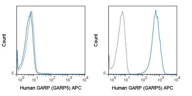 GARP Antibody (A18633)