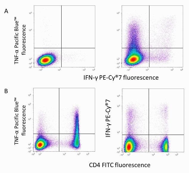IFN gamma Antibody (A18713) in Flow Cytometry