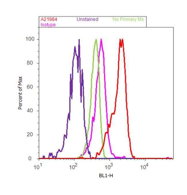 ACAA1 Antibody (A21984) in Flow Cytometry