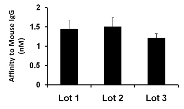 Mouse IgG (H+L) Secondary Antibody (A27022)