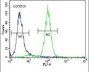 Acetylcholinesterase Antibody (PA5-15010) in Flow Cytometry