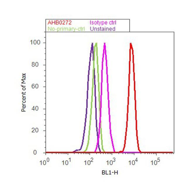beta Amyloid (1-20) Antibody (AHB0272) in Flow Cytometry