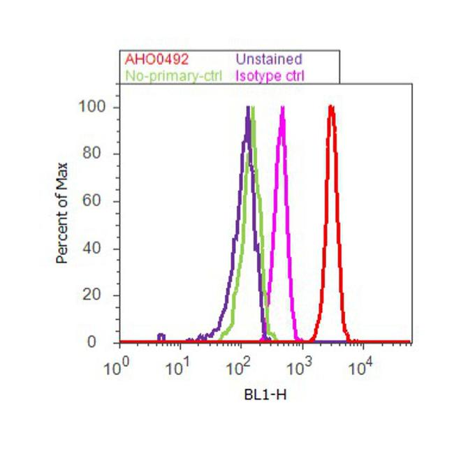 Paxillin Antibody (AHO0492) in Flow Cytometry