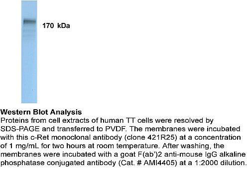 RET Antibody (AHO1482) in Western Blot