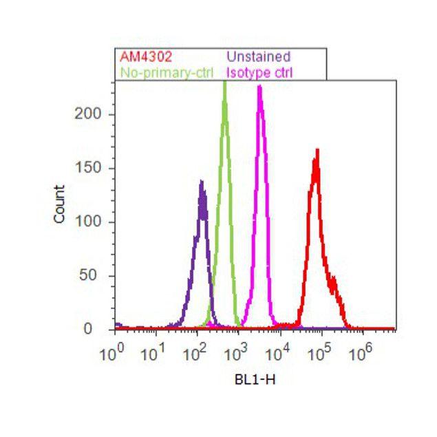 beta Actin Antibody (AM4302) in Flow Cytometry