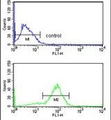 ANO7 Antibody (PA5-26428) in Flow Cytometry
