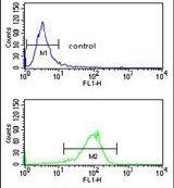 ATP1B2 Antibody (PA5-26279) in Flow Cytometry
