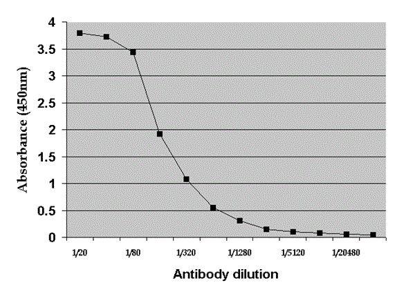Rat Albumin Antibody (PA1-85142) in ELISA