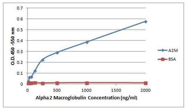 A2M Antibody (MA5-14663) in ELISA