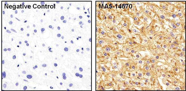 Apolipoprotein A1 Antibody (MA5-14670) in Immunohistochemistry (Paraffin)